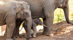 Baby Boy Boom: Taronga Zoo Gets A Big