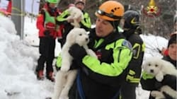 Three Puppies Saved From The Rubble After Italy