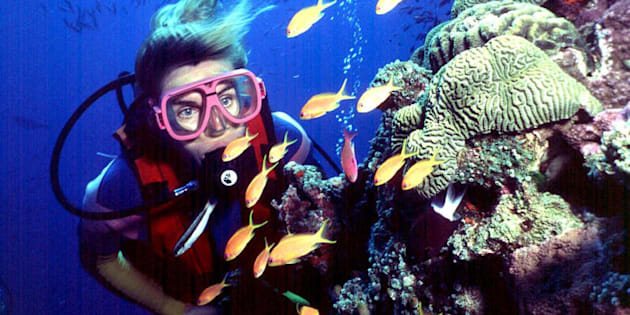 UNESCO has requested Australia accelerate efforts to improve the Great Barrier Reef's water quality.