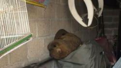 El rescate de una martucha moviliza a la Brigada Animal