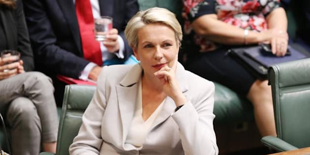 Acting Opposition Leader Tanya Plibersek says Malcolm Turnbull is desperate for wins