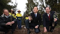 Abbott Just Can't Hide His Contempt For Turnbull Axing Another One Of His