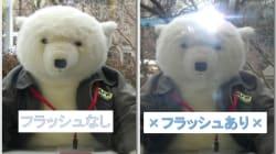 上野動物園がフラッシュ撮影禁止を呼びかけ 強い光は動物に悪影響、でもそれだけじゃない