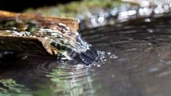 大寒の朝に汲んだ水は1年間腐らない? 二十四節気「大寒」とは