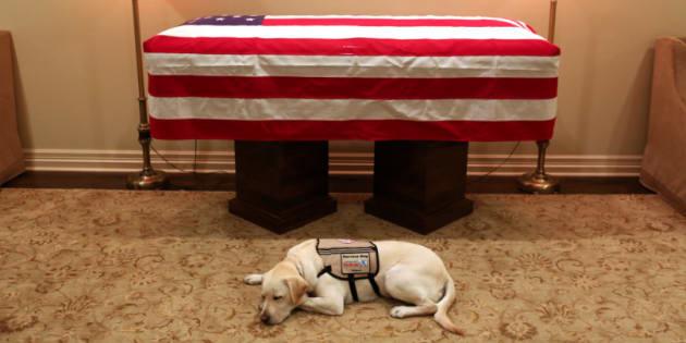 Sully, le labrador qui aidait George Bush à se déplacer.