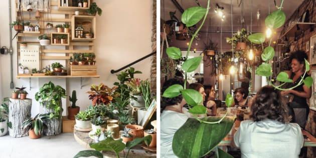 Falar de botânica é falar de bem-estar.