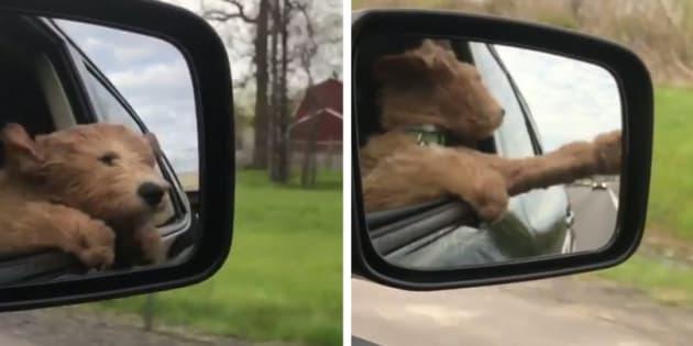 Este cachorrinho ama brincar com o vento.