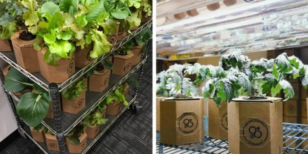 Plantas em casa: Como ter uma horta usando caixas de papelão