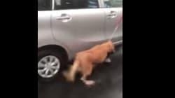 Indignante: ata a su perro al coche y lo arrastra bajo la