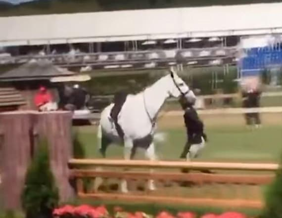 Johnson & Johnson heiress tried to kick race horse