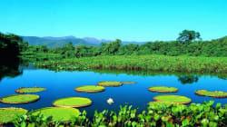 A Serra da Capivara e outros 7 parques que protegem o patrimônio