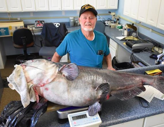 Florida man catches 120-pound catfish