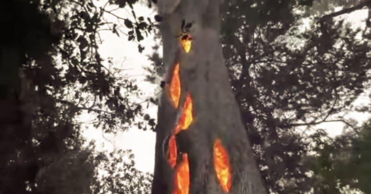 """Résultat de recherche d'images pour """"incendies californie maisons arbres verts"""""""