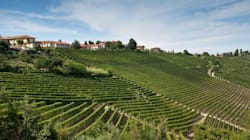 BLOGUE Une référence parmi les producteurs de vins du