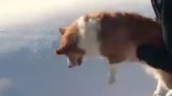 La ilusión óptica del perro a punto de volar que te va a romper la