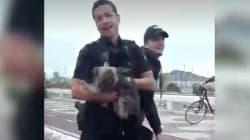 La heroica acción de unos policías para evitar el atropello de un perro en