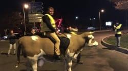 Le maire de Saint-Étienne-du-Rouvray porte plainte après la dégradation de vaches à un
