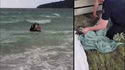 Un kangourou sauvé de la noyade, ça ne pouvait arriver qu'en