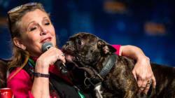 Carrie Fisher avait fait de son bouledogue français une véritable
