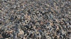 FOTOS: Miles de estrellas de mar mueren por heladas en Reino