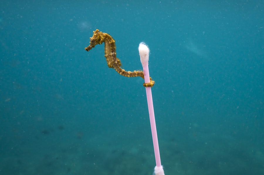 A small sea horse grabs onto garbage in Indonesia. This tiny sea horse drifted through our snokeling site along with a raft of tide-driven trash, especially bits of plastic. It was a heartbreaking scene that perfectly summed up my experience in Indonesia.