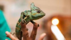 ペットショップの爬虫類はどこから来たか?―国内市場調査から―