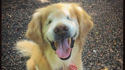 Blind Ontario Therapy Dog Smiley Doesn't Have Long Left To