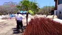 En Holbox, Profepa halla 36 proyectos turísticos dentro de zona