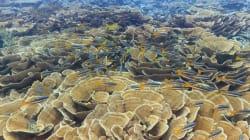 Pour sauver le corail, ces îles paradisiaques ont interdit les crèmes