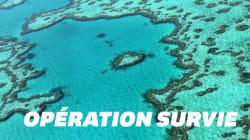 La Grande Barrière de Corail pourrait survivre grâce à des