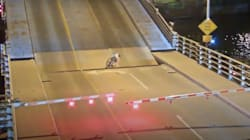 Cette cycliste l'a échappé belle sur un