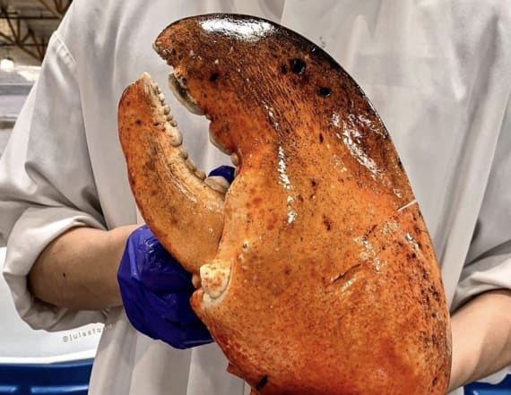 Costco is selling gigantic 7-pound lobster claws