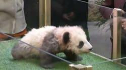 La rencontre entre Brigitte Macron et le bébé panda a été