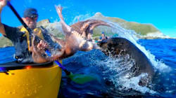 Un lobo marino cachetea a un hombre con un pulpo porque los animales ya no nos