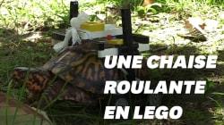 Cette tortue blessée peut dire merci à ses vétérinaires