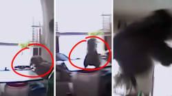Le saut de cet écureuil a fait rire le policier venu