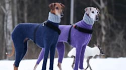 Ces chiens en cols roulés ont inspiré bien des