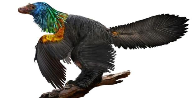 Ce dinosaure avait des plumes arc en ciel