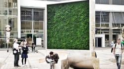 Questo muro verde ha la stessa potenza di 275 alberi nel combattere l'inquinamento