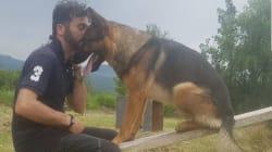 Ucciso Kaos, il cane eroe di Amatrice: