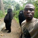 Il selfie di questi gorilla con un ranger nasconde una dura