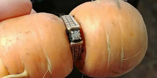 Elle retrouve la bague de fiançailles perdue 13 ans avant... autour d'une carotte
