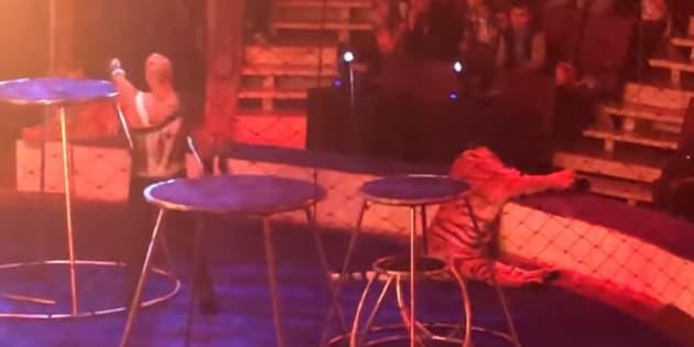 Les internautes n'ont pas apprécié ces images, et ont dénoncé la maltraitance animale des cirques.