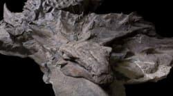 «Le dinosaure cuirassé le mieux conservé jamais découvert» est décrit en