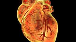 静脈から動脈への細胞運命切り換えの研究