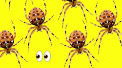 Seeing More Spiders Than Usual? Study Suggests They're No Longer Afraid Of