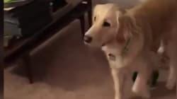 Ce chien voit son jouet préféré prendre vie, et c'est