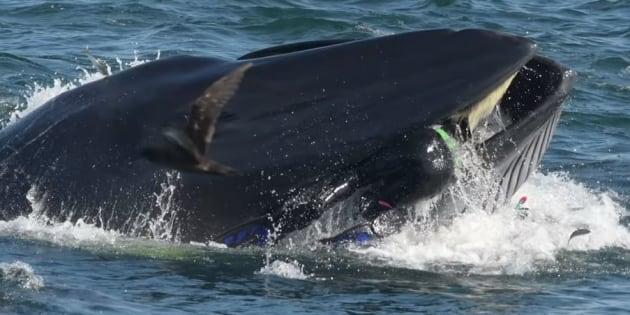 Le plongeur Rainer Schimpf a été avalé puis recraché par une baleine en Afrique du Sud, en février 2019