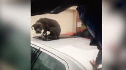 Le touchant sauvetage d'un chien sauvé coincé sur le toit d'une voiture après la tempête