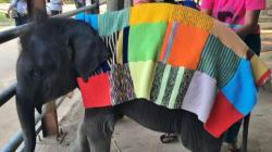 Los elefantes en el Sudeste Asiático están pasando muuuuucho